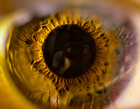 Eye Macro Close-up Wallpaper