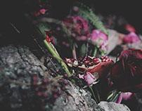 Pomegranate Lady