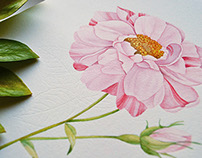 Vintage rose pattern
