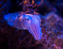 Undersea Community
