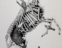 """Cadáveres Habitables (Serie) - """"Deer"""""""