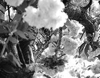 Tree Study Photography