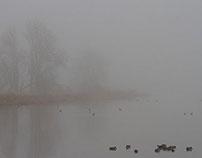 Foggy Day on Ridgefield NWF