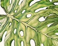 Vegetal patterns