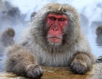 Bathing Ape