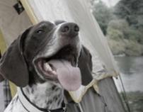 Fort Dodge Animal Health ProMeris Print Campaign