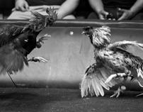 Cockfights