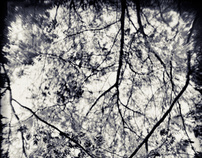Plastic Diffraction – Nature