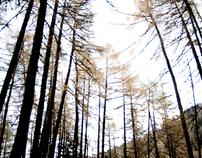 Vercors Autumn 2011