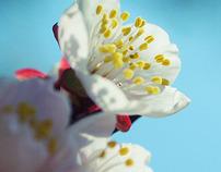 Multiple flowers。Kyoto