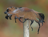 Fungus life in Southern Spain