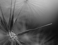 Macro Photography 2