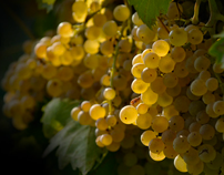 Giale wines // Website