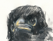 Drawings - Young Birds