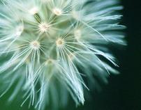 Macro Photography- Nature