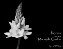 Portraits from a Moonlight Garden