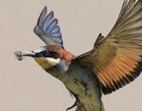 Migratory birds - humanitarian project
