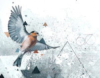 Equilateral Chaffinches