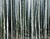 Vertical Woods