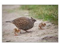 New Zealand wild life