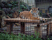 Zoos 2015-Ongoing