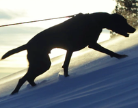Local Dog Winter