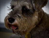 Animal Photography - Term 1