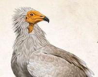 scientific illustrations of birds