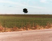 murgia lands  