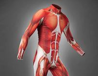 Muscle Skin Suit 2012