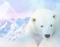 Snowport Website