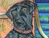 My Dog Shelley