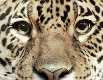 Animal Portraits #2