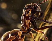 Formiguinhas - Ants