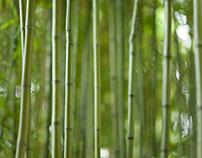 Abstract Bamboo