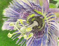 Rainforest Garden Illustrations