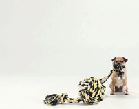 """Small Dog, BIG WORLD"""