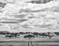 Kenya Black & White