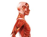 Medical illustrations for Edikamed editorial