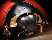 Mr Ladybird - 3D artwork