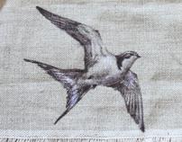 Par Avian