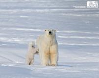 Animal Planet - Campaña