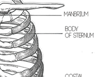 Anatomy of the Hue-Man body
