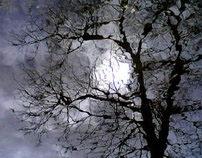 Trees | Photo