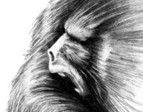 Dibujos / Ilustraciones