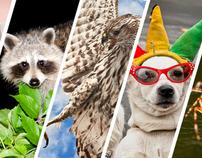 Animals & Birds - Stock Images