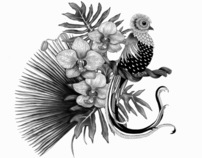 Black and White Patterns and Illustrations