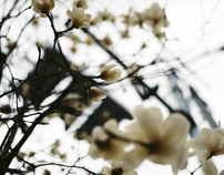 Tokyo: the first spring