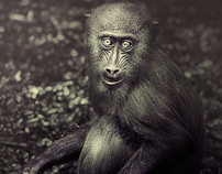 Monkeys ,story tellers