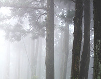 Forest misty